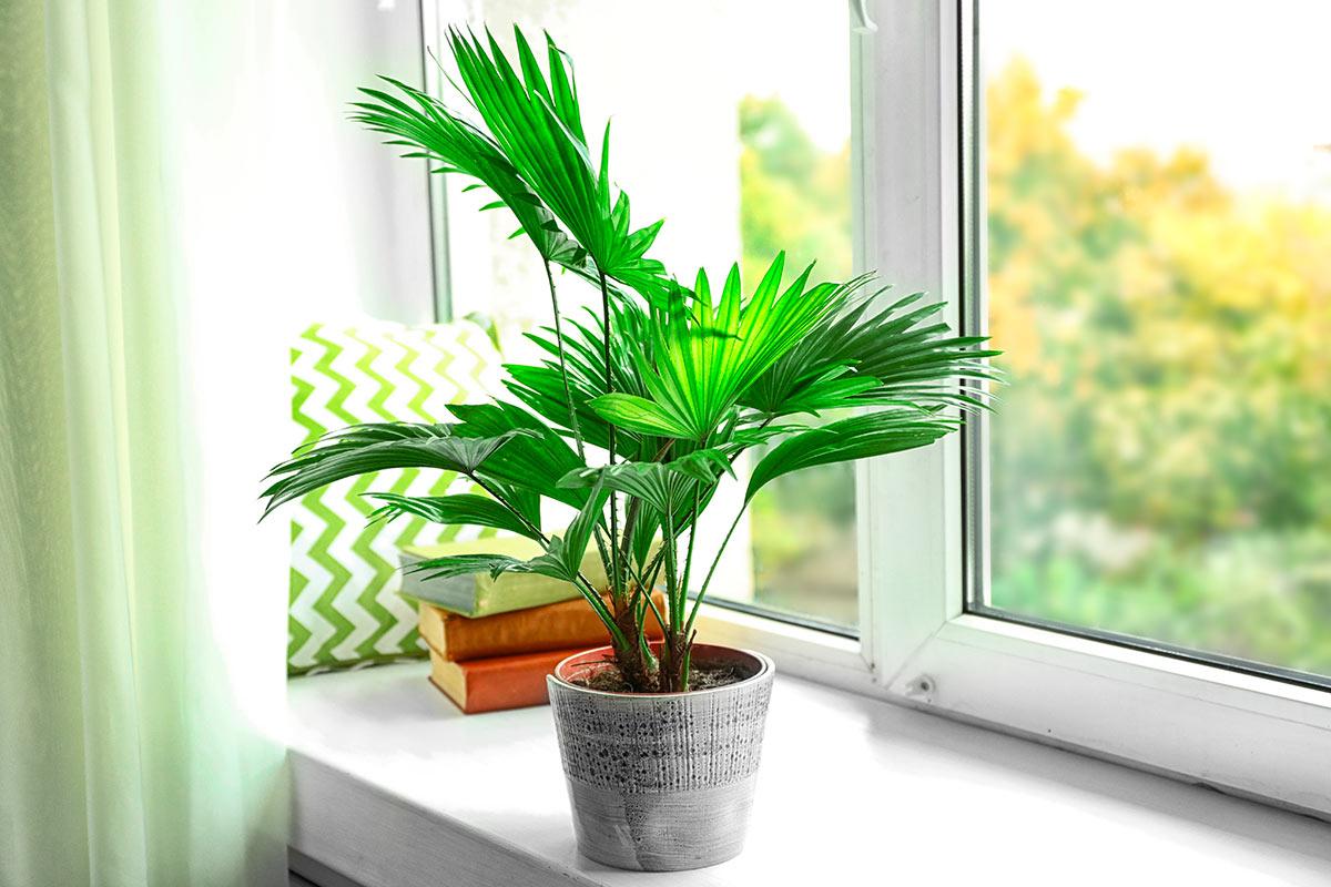 Arredare con le piante che purificano l 39 aria faber - Piante che purificano l aria in casa ...