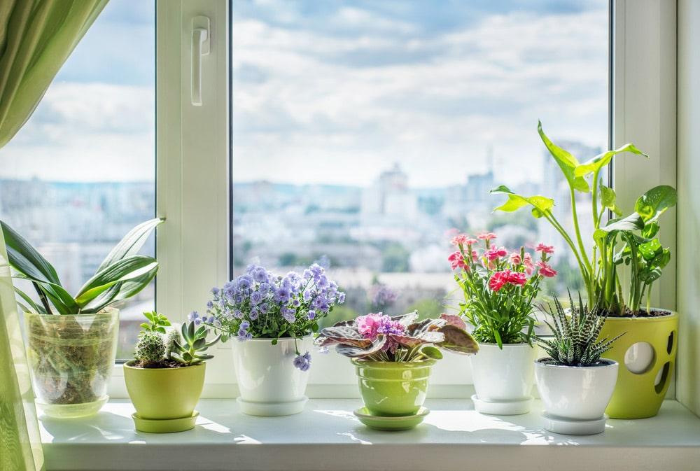 Come profumare la casa e la cucina eliminando i cattivi odori - Faber